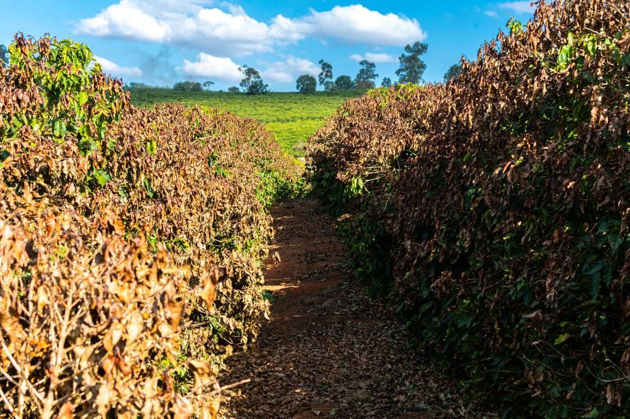 Fazenda Roseira, em Jacuí-MG -