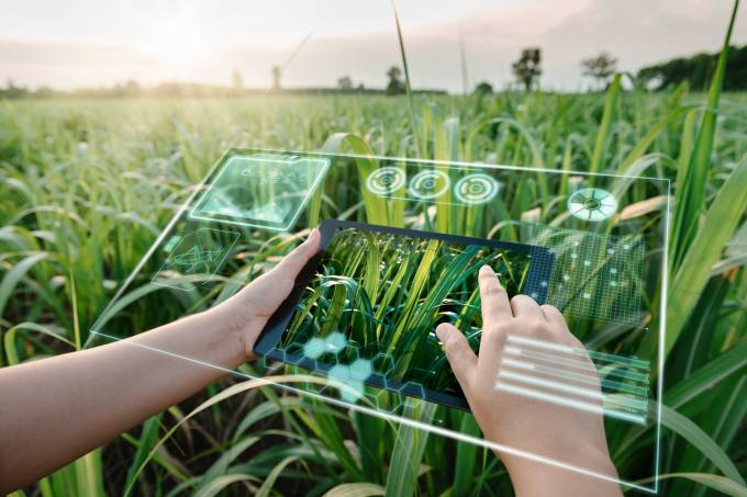 Female Farm Worker Using Digital Tablet With Virtual Reality Artificial Intelligence (AI) for Analyzing Plant Disease in Sugarcane Agriculture Fields. Technology Smart Farming and Innovation Agricultural Concepts.
