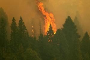 Fogo avança sobre o Parque Nacional das Sequoias, na Califórnia