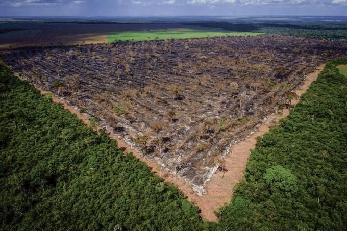 PAGINA-ABERTA-DESMATAMENTO-AMAZONIA-1.jpg